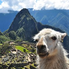 Hike to Machu Pichu in style  Rates for the seven-day trip start at $2,990 per person, based on double occupancy in the low season (November 1st - December 14th). The price includes lodging, meals and daily hikes with expert guides, plus entrance to Machu Picchu, a hike to Huayna Picchu and an overnight at Inkaterra Machu Picchu Pueblo. Every group travels with its own cook who is able to meet special dietary requirements. -dailyworth.com