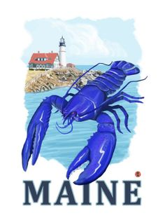 Maine blue lobster