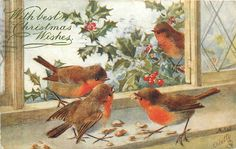 ■ Tuck DB...       four robins eating nuts on window sill, one outside | artist A.W. (A.L.West),  (first used 08/12/1906)