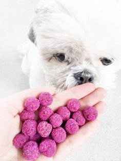 Your dog will LOVE this tropical pink banana and beetroot dog treat recipe! Easy to make, vegan, grain free and yummy to eat download the FREE recipe here.