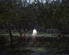 Light powered by 300 apples by Caleb Charland