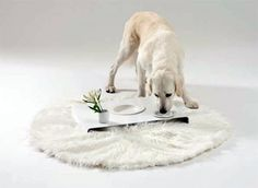 This beautiful all-in-one feeder is made from baked-clay by Marco Morosini, the creative mind and principle designer behind Italian doggy design studio Dog is a God.