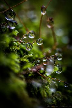 Wildlife Natural Wonders (via Water drops by Paulo Dew Drops, Rain Drops, Foto Macro, Macro Photo, Morning Dew, Water Droplets, Walk In The Woods, Natural Wonders, Belle Photo