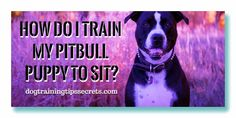 How To Train Your Dog , Dog Training in Home, Dog Training History, Dog Training Books , Dog Training and Dog Training methods Dog Training Books, Dog Training Methods, Basic Dog Training, How To Train Your, Pitbulls, Puppies, History, Dogs, Animals