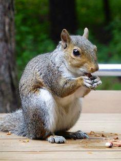 Friendly squirrel at Elveden Forest Center Parcs