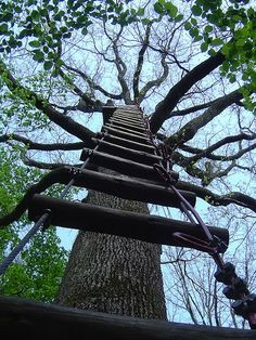 ladder leading to a tree house! It'd be cool if I could somehow hang up a ladder at the top of a tree so I could climb up- I suck at climbing trees. Heh.