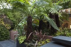 Ambience Images   Patio garden at basement level at the Morgan house in Notting Hill, London, UK, designed by Modular Gardens in conjunction with Crawford & Gray Architects. Showing slate steps, raised bed and powder-coated steel planter, with tree ferns, ferns, melianthus, phormiums, ornamental grass, banana and olive trees, bamboo and yucca. A copper reflective material is used on the wall behind the planting to create a mysterious mirage-like feeling of increased depth. The left wall is a…
