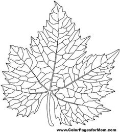 leaves coloring page 38