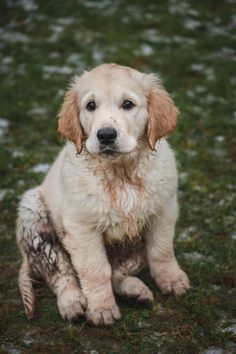 Mr. Muddy Paws