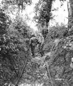 Hedgerows during the battle of Normandy - Summer 1944.