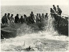 Georges Viollon (1915-1978)  Tampon au dos et légende  Sicile Italie   La pêche au thon, la Mattanza  Tirage argentique original d'époque  17,5 x 23,5 cm  Vers 1950