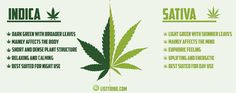 Image result for nicknames for marijuana plant