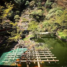 koyasan_nanzanbou 高野山 三宝院 臨紅庭 #高野山 #koyasan #庭 #日本庭園 #池 #pond #鯉  #コイ #garden #japanesegarden Mount Kōya 2017/04/28 14:45:54
