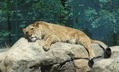 29 Unforgettable Zoos Everyone Should Visit.