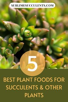 Here are the best plant food for succulents and other plants. It's important to use the right kind of plant food for your succulents and cacti. Using the wrong fertilizer can result in burned or even dead plants. Here are a few of the best succulent plant foods. Check this pin for full details! #succulentfood #succulent #succulentcare Succulent Fertilizer, Succulent Soil, Cacti And Succulents, Planting Succulents, Cactus Plants, Cactus Types, Types Of Plants, Liquid Fertilizer, Organic Fertilizer