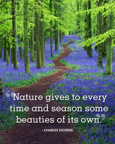 """Spring Quotes to Welcome the Season of Renewal """"Nature gives to every time and season some beauties of its own."""" -Charles Dickens quote""""Nature gives to every time and season some beauties of its own. Short Nature Quotes, Mother Nature Quotes, Quotes Instagram Bio, Minions, Season Quotes, Summer Nature Photography, Jolie Phrase, Spring Quotes, Garden Quotes"""