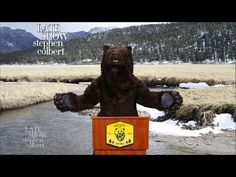 This Bear Has A Rebuttal To Trump's Hunting Bill