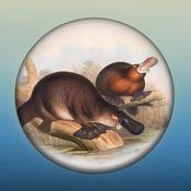 Field Guide to NSW Fauna by Australian Museum