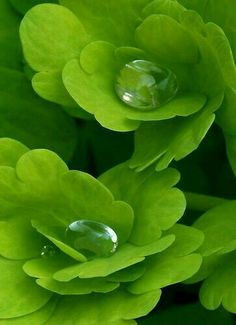 Green with dew drops