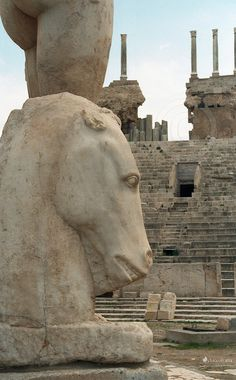 Roman Theater Ruins in Leptis Magna, Libya Ancient Ruins, Ancient Artifacts, Ancient Rome, Ancient Greece, Ancient History, Mayan Ruins, Roman Architecture, Ancient Architecture, Roman History