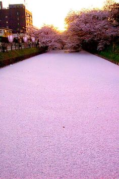 The Meguro river in Tokyo.