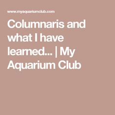 Columnaris and what I have learned... | My Aquarium Club