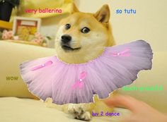 dancer doge. wow.
