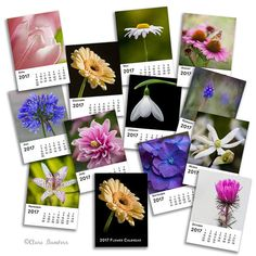 2017 Flower Calendar 5x7 Desk Calendar 5 x 7 by BambersImages
