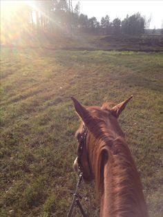 💞 #horse #horsepower #horseriding