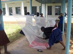 Happy Monday and World Malaria Day! Students in Tanzania race each other to hang Mosquito nets the fastest during their Malaria 101 education day workshop. 17 students were chosen to be Student Health Ambassadors for the program. The students attended a half-day training program which included a Malaria 101 lesson interactive Malaria-themed games and the creation of various artworks to be displayed throughout the school. The student body enjoyed three skits performed by the Student Health…