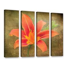Flowers In Focus 4 by David Kyle 4 Piece Gallery-Wrapped Canvas Set