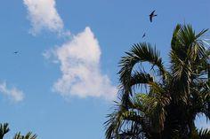 3/1(水)バリ島ウブドのお天気は晴れ。室内温度30.4℃、湿度61%。久しぶりの晴天!あーつーいーっ!!鳥も大空を舞っています。