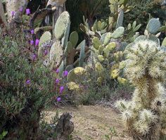 Cactus Garden in Topanga Canyon