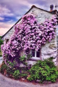 Clematis on the side of old house.