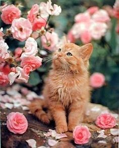 chat au milieu des roses