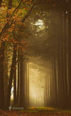 ~~Leaving the Tree • magical autumn path, Netherlands • by Lars van de Goor~~