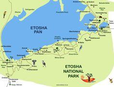 L'Etosha National Park è il principale parco nazionale della Namibia ed uno dei più estesi e famosi di tutta l'Africa per safari fotografici