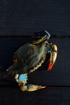 Memories of crabbing on the Delaware Shore as a child....nostalgia