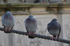 Go check out my blog post!    #pigeon #bird #nature #poland #gdansk #historicalcentre #justchillin Pretty Good, Pigeon Bird, About Me Blog, Poland, Nature, Animals, Check, Naturaleza, Animales
