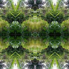 "Saatchi Art Artist Heather Bolton; Photography, ""Garden Fantasy"" #art"