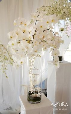 Orchid Centerpiece- totally doing this because Orchids are my favorite flower