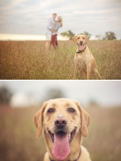 Engagement Shoot with Dogs - PHOTO SOURCE • AMIE REINHOLZ PHOTOGRAPHY
