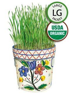 Wheatgrass Liquid Sunshine Organic HEIRLOOM Seeds (LG)