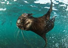 Animal Ocean Seal Snorkeling - Cape Town Tourism