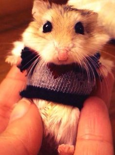 How cute.... hamster