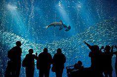 Monterey Bay Aquarium - Best Aquariums
