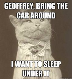 geoffrey bring the car around i want to sleep under it - Aristocat