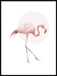 A poster of a beautiful pink flamingo with a white background. Print of a flamingo. Above the flamingo is a light pink circle that completes the motif. A very stylish poster for either a modern or retro decor. Wall Prints, Poster Prints, Gold Poster, Poster Poster, Poster Wall, Wal Art, Animal Posters, Art Posters, Online Posters