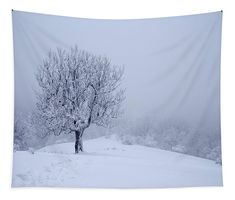 Lonely tree on foggy winter day. For more images and materials vosit my website :-) Beautiful Winter Scenes, Beautiful Images, Winter Trees, Winter Day, Large Tapestries, Tapestry, Camera Art, Winter's Tale, Travel Photographer