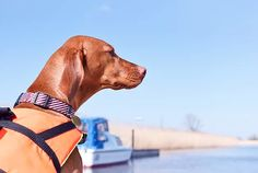 Best Useful and Stylish Dog Collars, Not just look good. Custom Dog Collars, Dog Collars & Leashes, Dogs On Boats, Dog Life Vest, Boat Safety, Dog Training Classes, Dog Collar Tags, Dog Health Care, Dog Wear